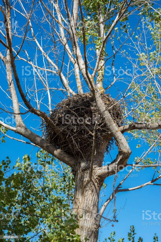 Nest of White Stork, Ciconia ciconia stock photo