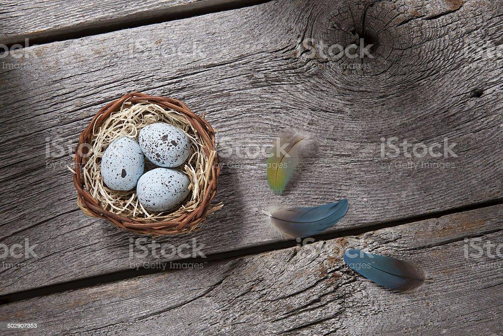 nest on barn wood royalty-free stock photo