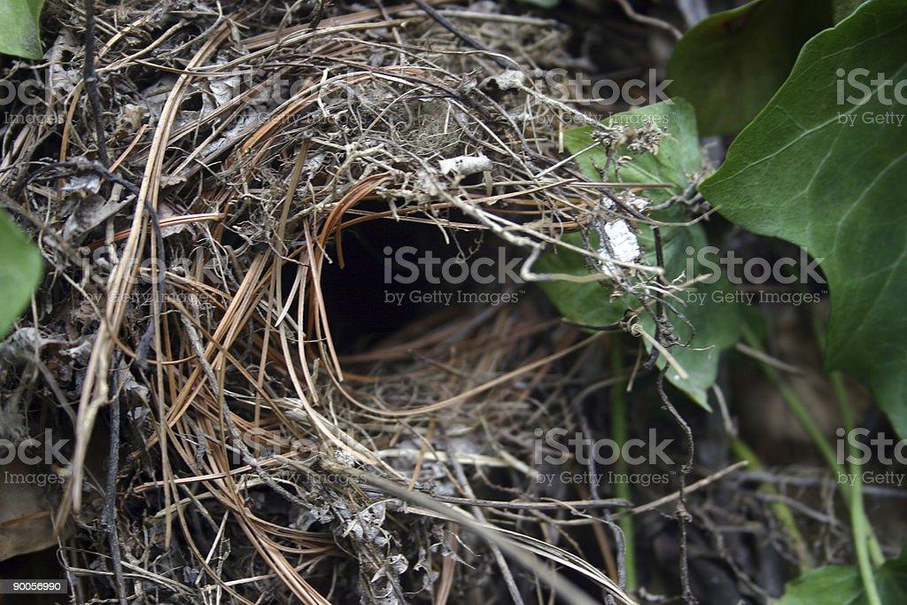 nest opening stock photo