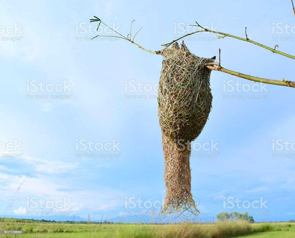 nest stock photo