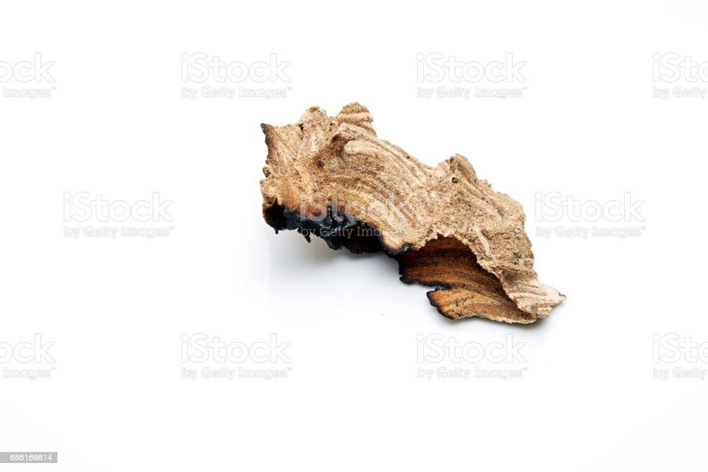 nest, wasp stock photo