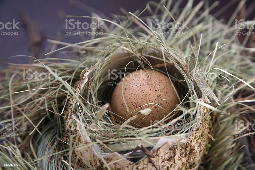 nest with egg royalty-free stock photo