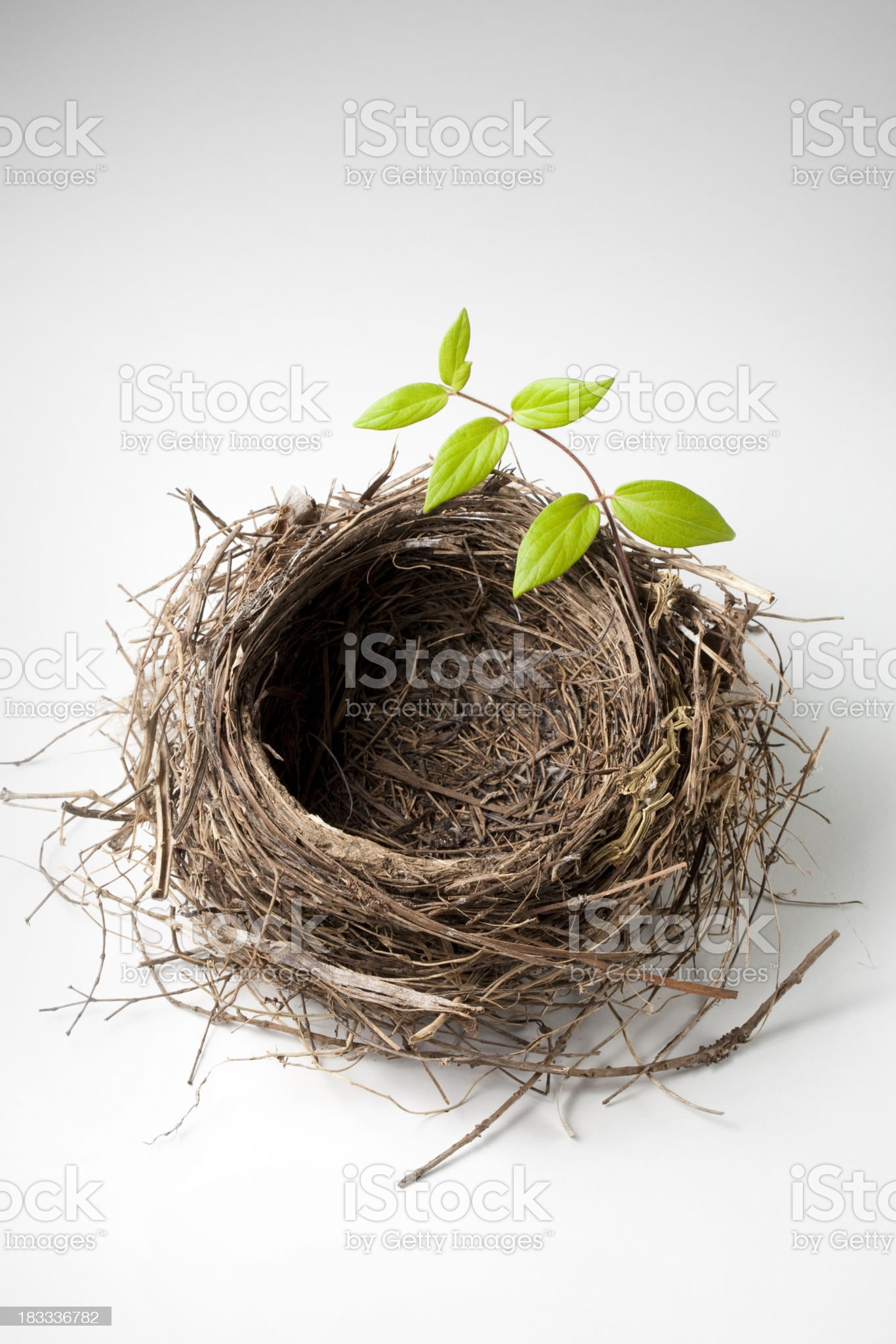 Nest with green twig royalty-free stock photo