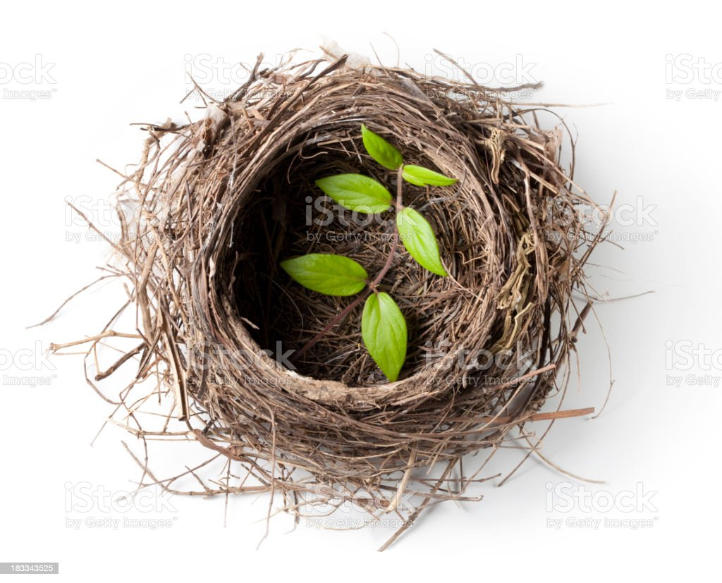 Nest with green twig stock photo