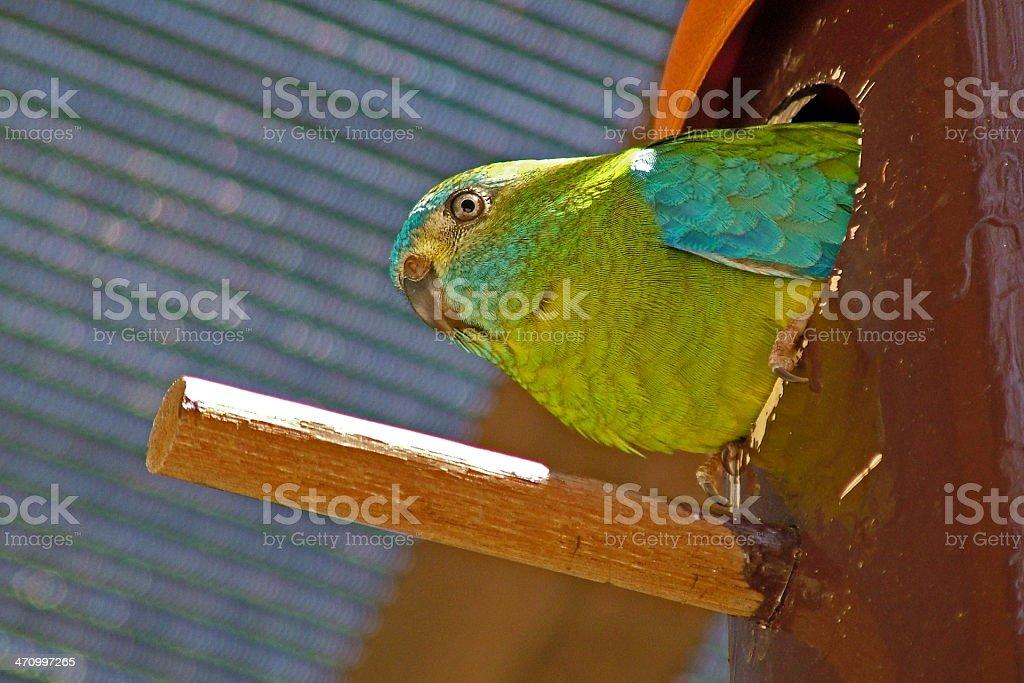 Nesting bird royalty-free stock photo