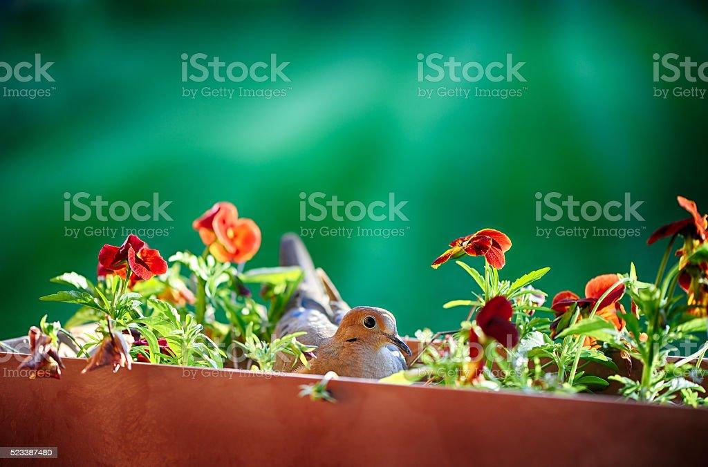 Nesting Bird stock photo