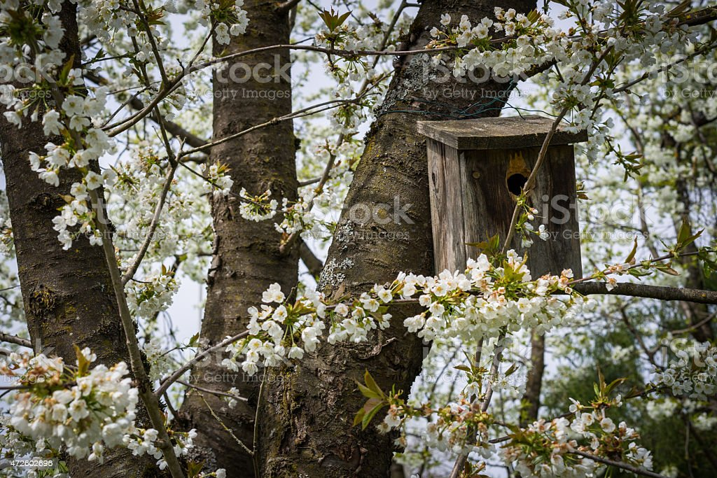 nesting box in a appletree full of blossoms stock photo
