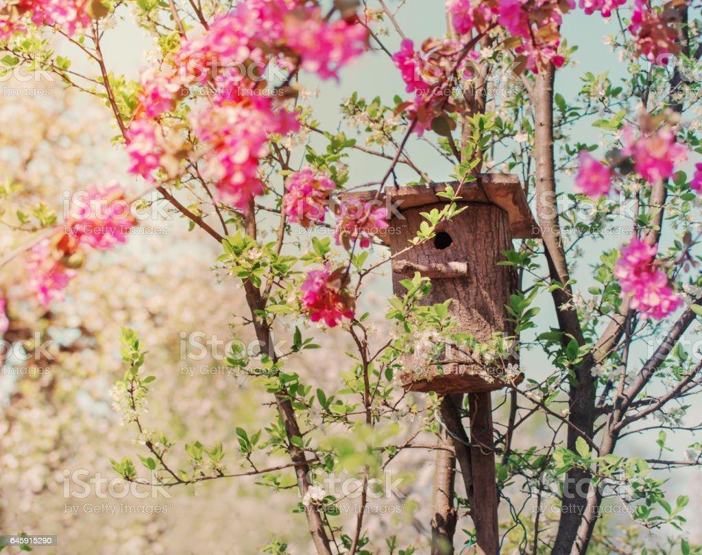 nesting box in spring garden stock photo