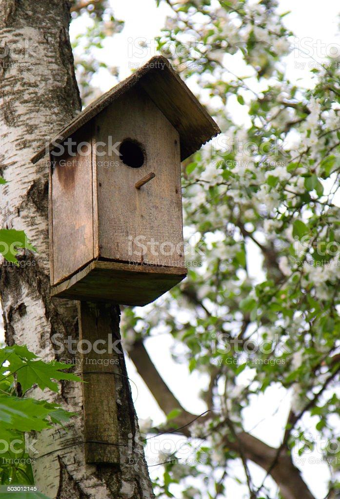 nesting box on a birch stock photo