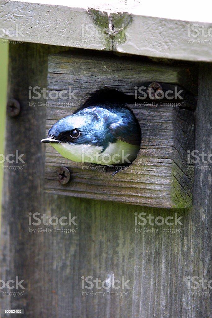 Nesting Box royalty-free stock photo