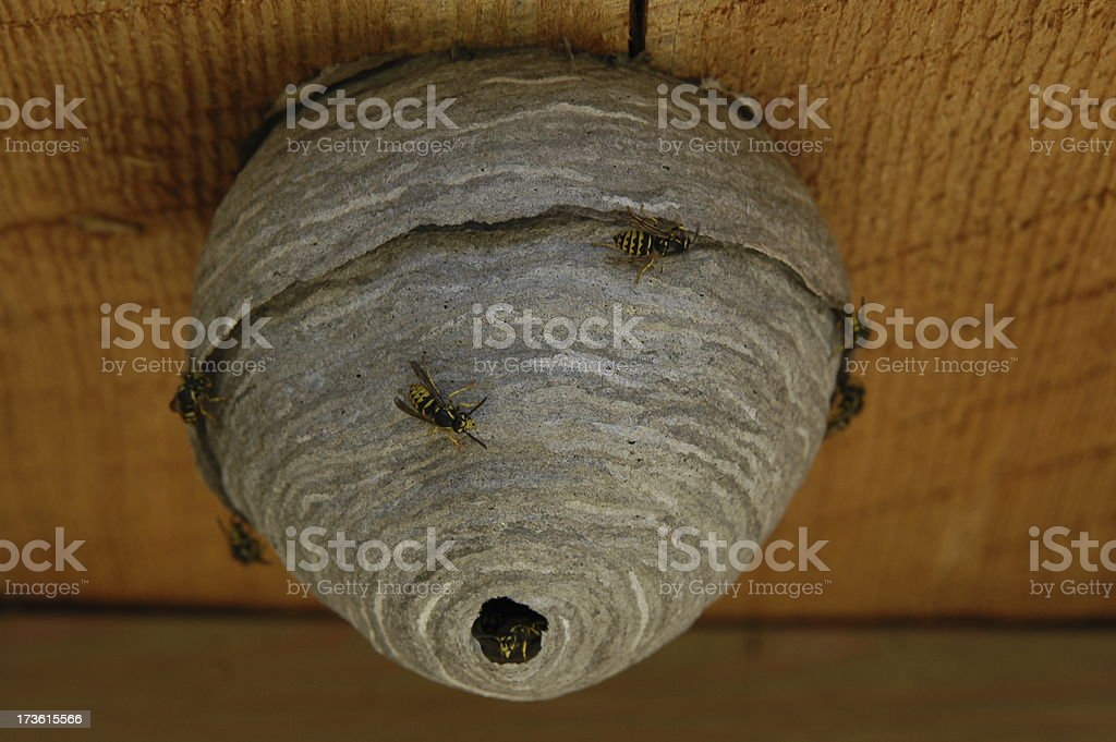 nesting insects royalty-free stock photo