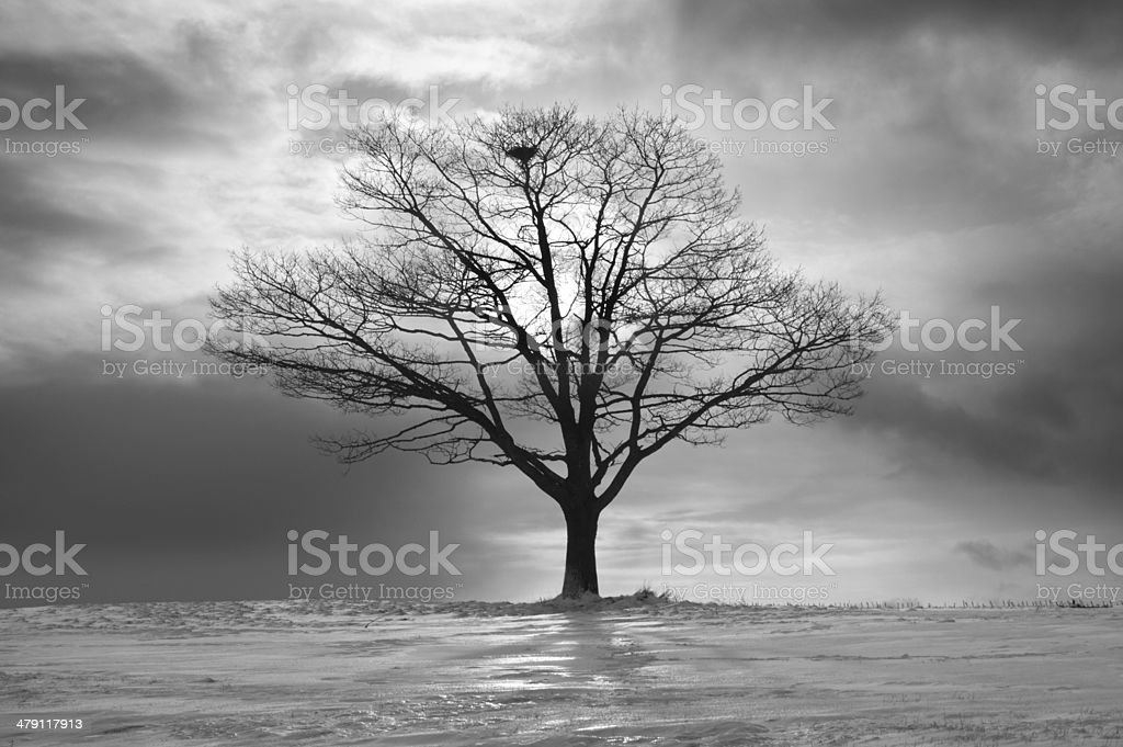 Nesting Tree royalty-free stock photo