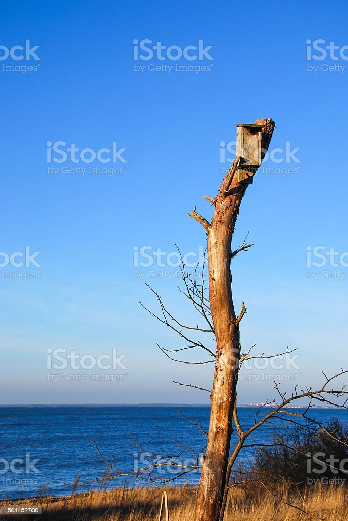 Nestling box on top of a stump stock photo