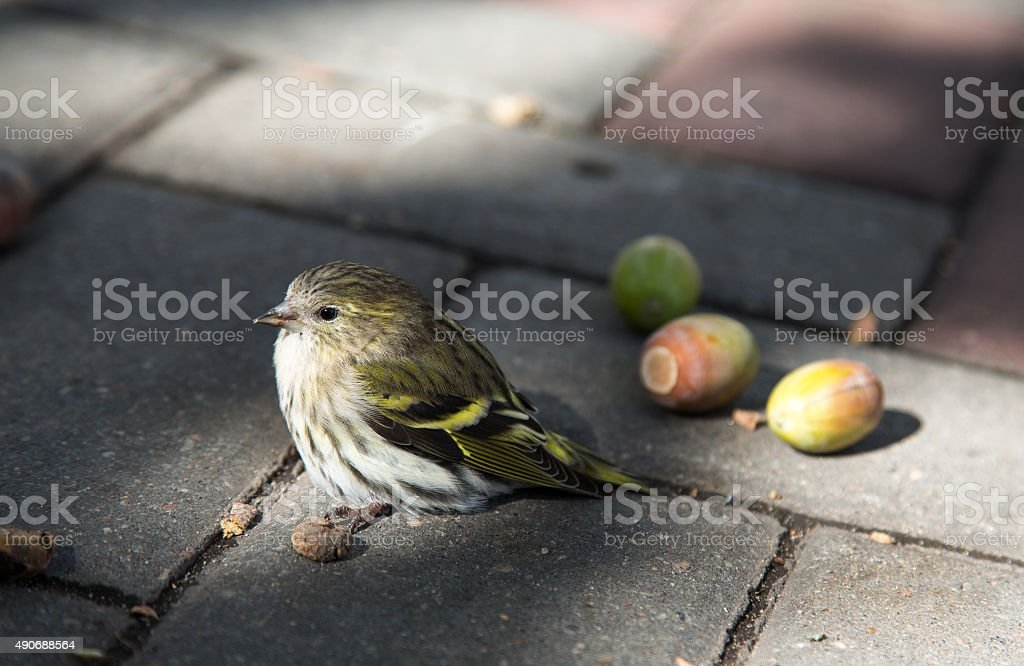 Nestling off from the nest stock photo