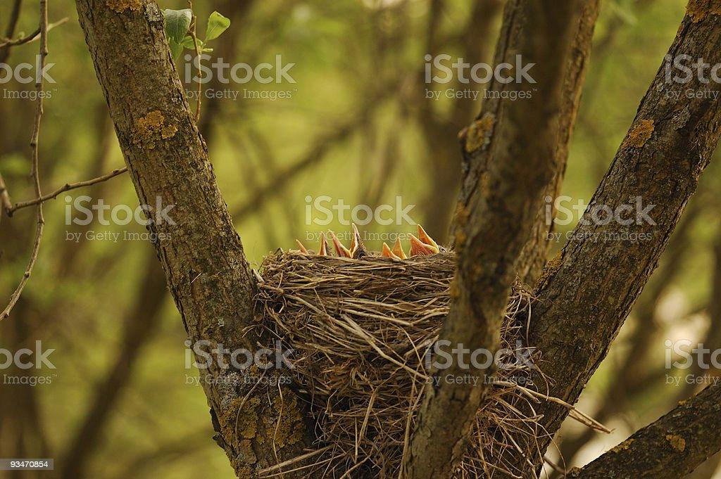 Nestling royalty-free stock photo