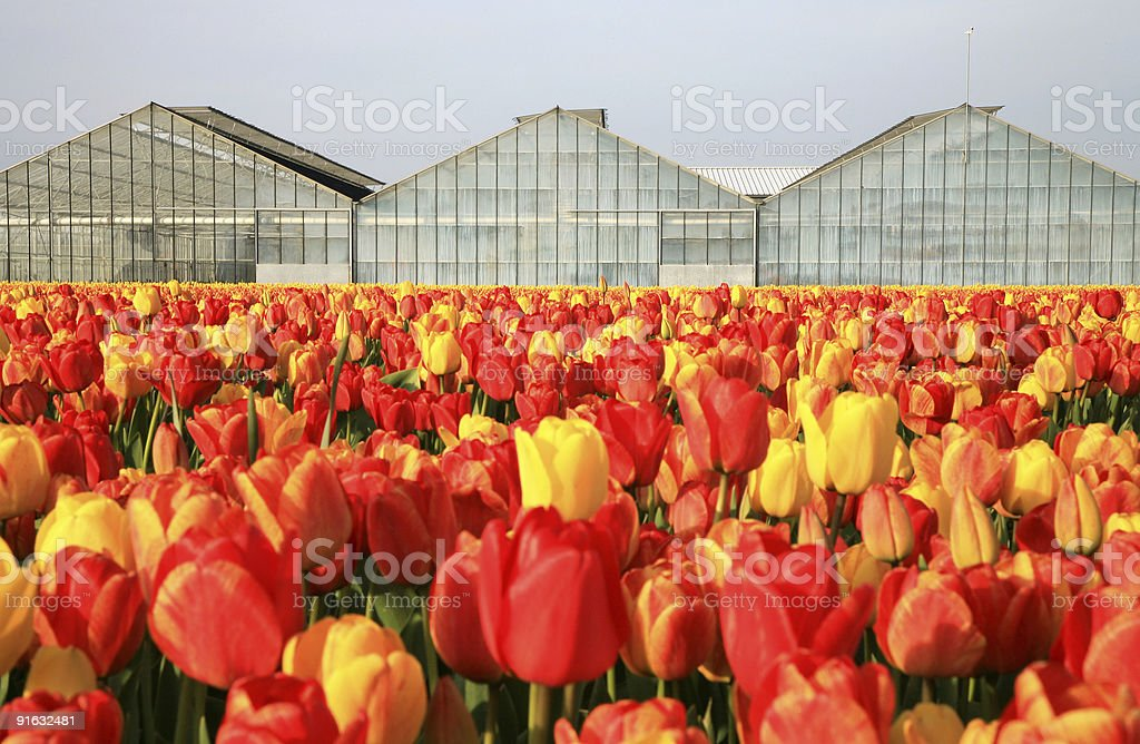 Netherlands by spring royalty-free stock photo