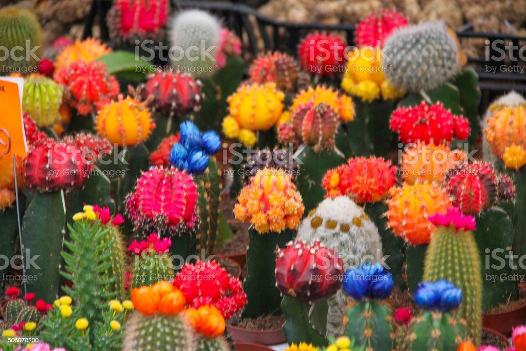 Netherlands: Flower Market (Bloemenmarkt) in Amsterdam stock photo
