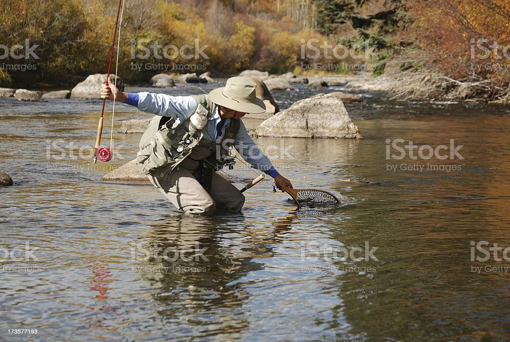Netting a Trout royalty-free stock photo