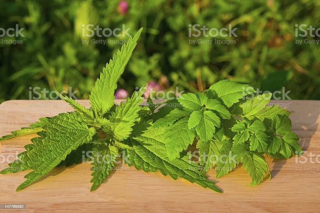 nettle with aise-weed on a board royalty-free stock photo