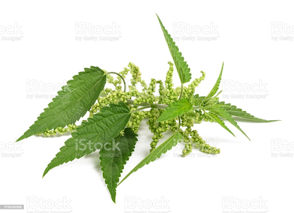 Nettle with flowers stock photo