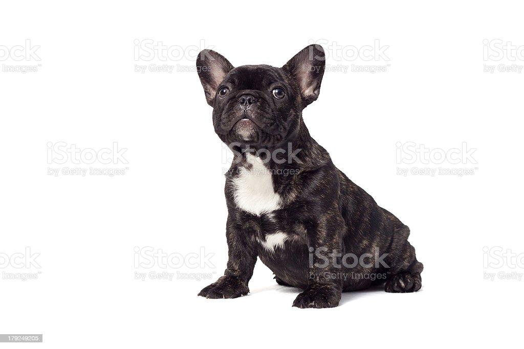 neugieriger hundewelpe stock photo