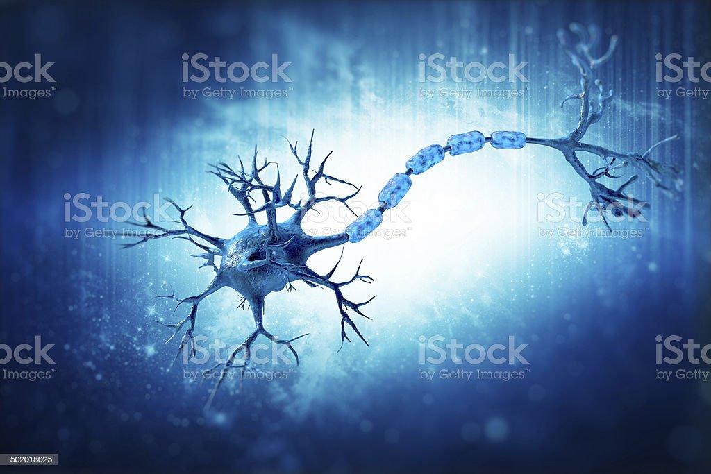 neuron humen stock photo