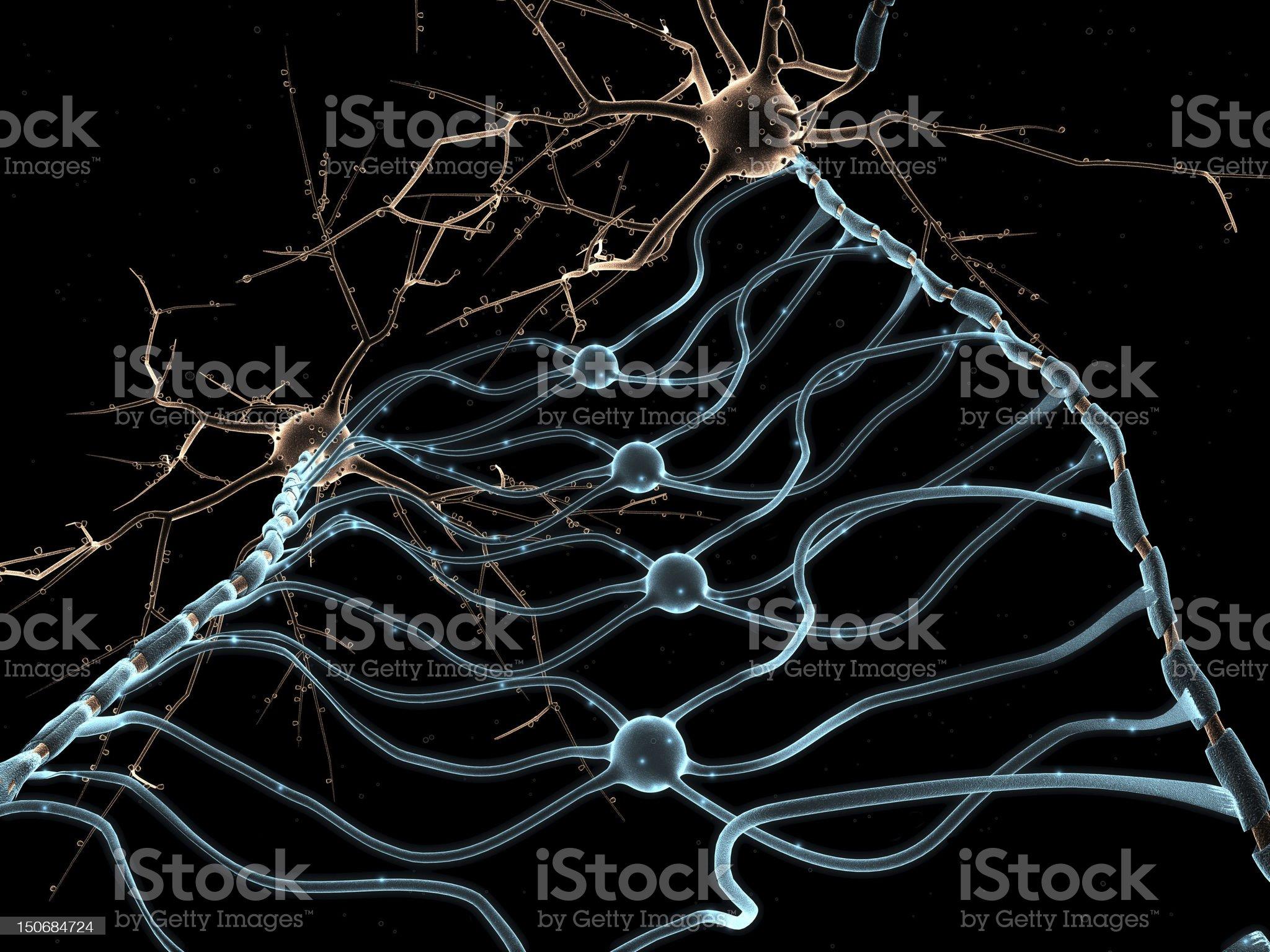 Neuron Oligodendrocytes royalty-free stock photo