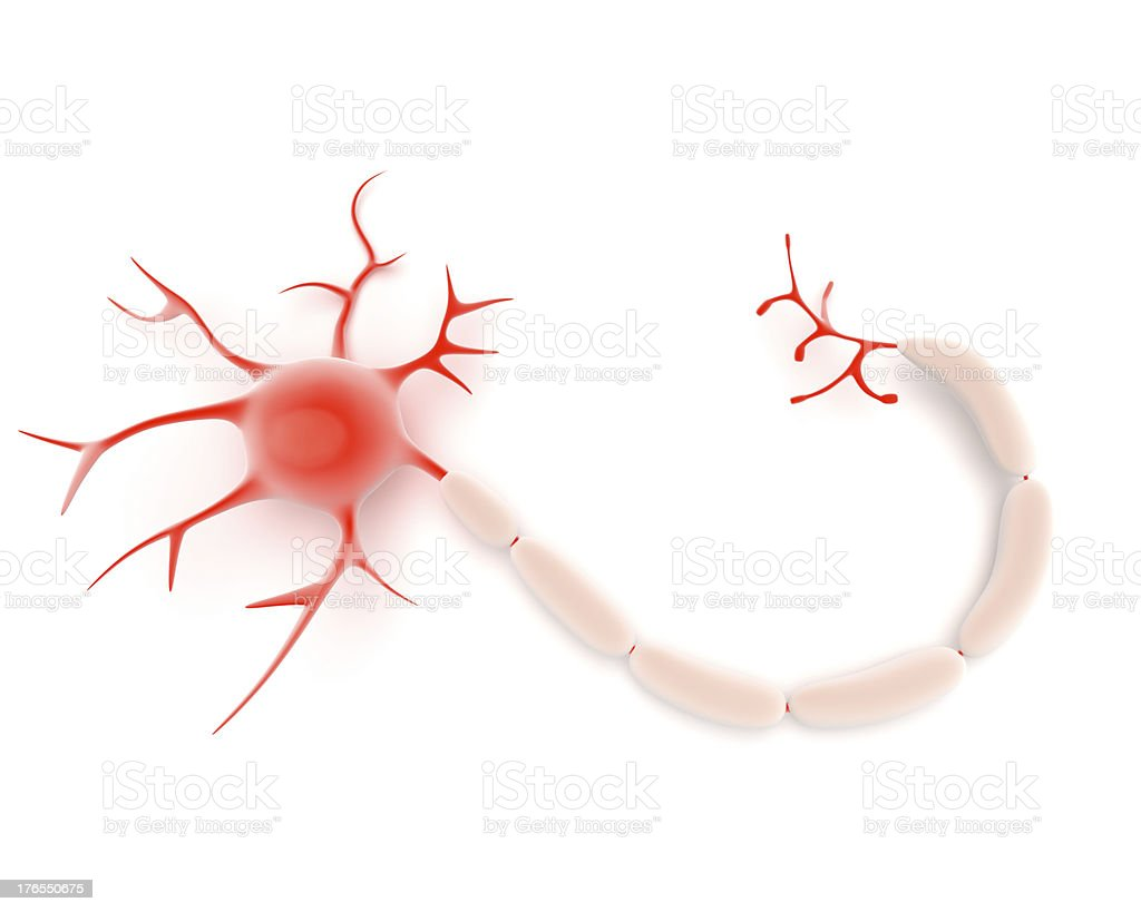 Neuron or nerve cell royalty-free stock photo