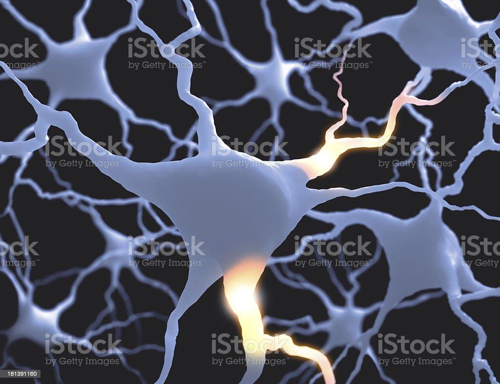 Neurones stock photo