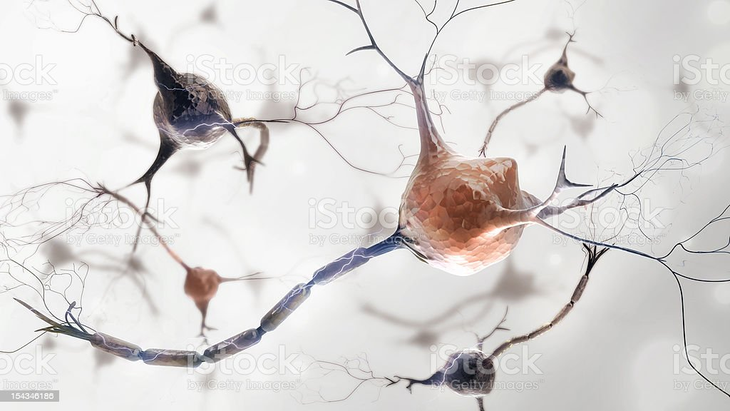 neurons and nervous system royalty-free stock photo