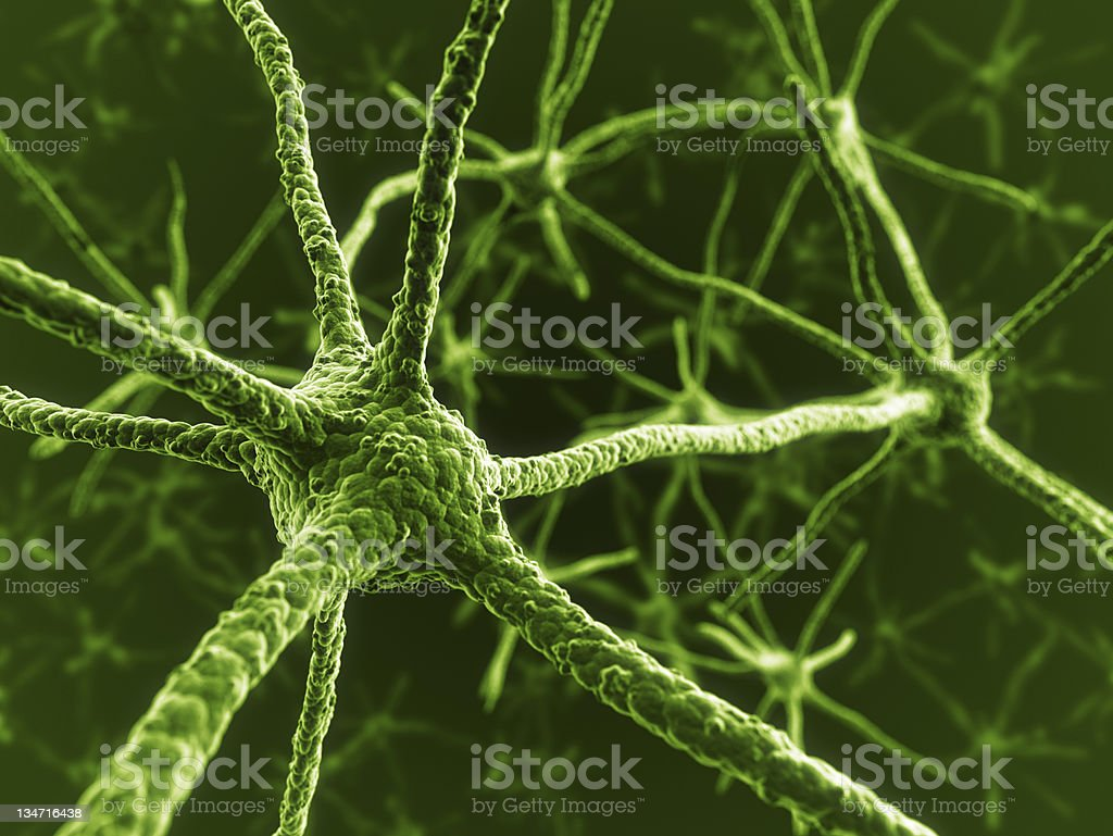 Neurons royalty-free stock photo