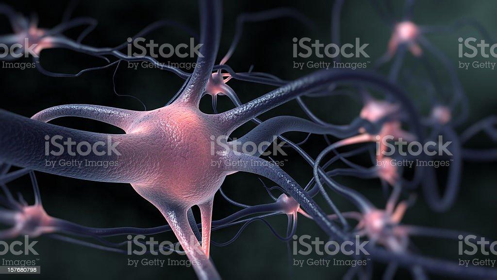 Neurons stock photo
