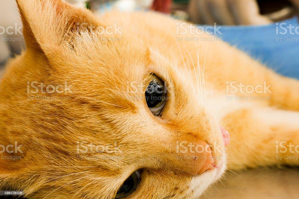 neutering cats stock photo