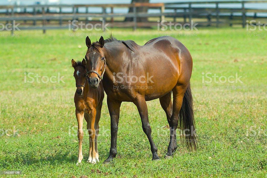 New Baby Equine Horse stock photo