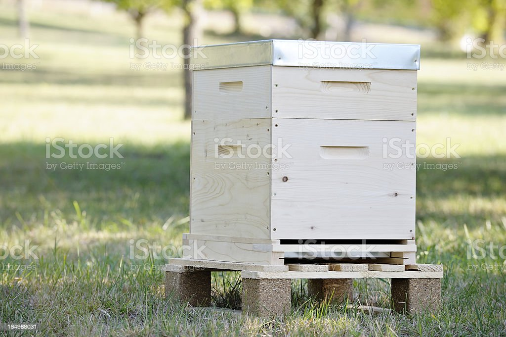 new beehive in orchard stock photo