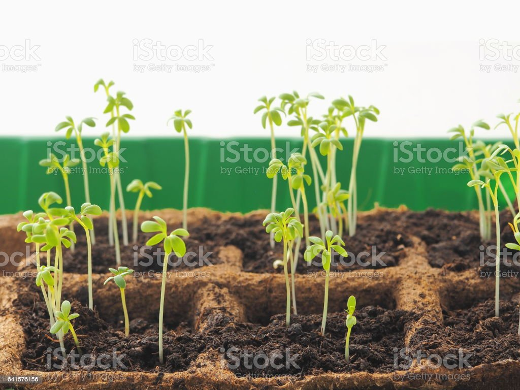 New beginning spring sprouts in soil. Horizontal. stock photo