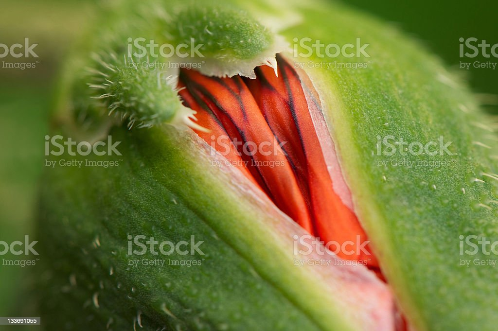 New Beginnings stock photo