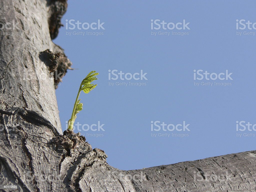 New beginnings royalty-free stock photo