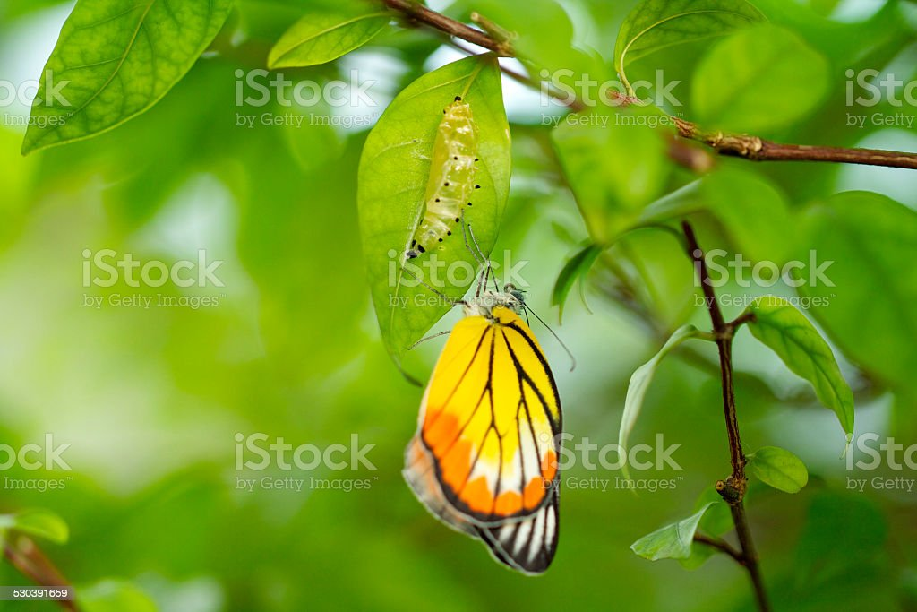 New Born Butterfly stock photo