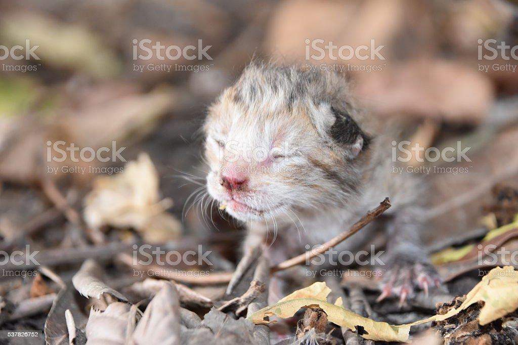 New born kitten stock photo