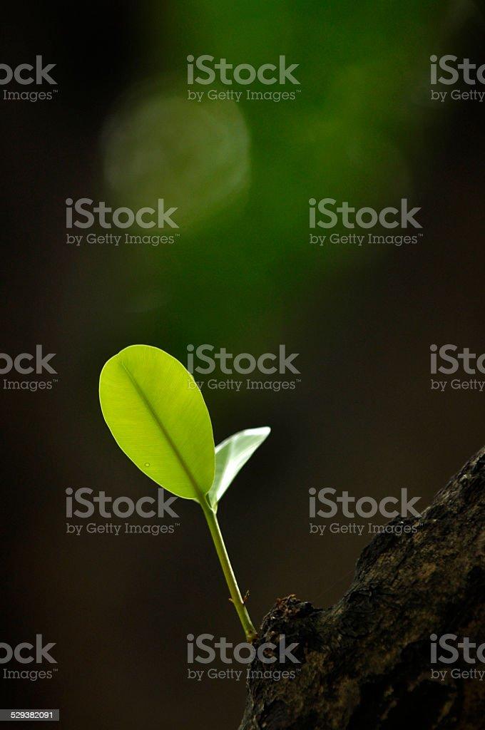 new born of botany stock photo
