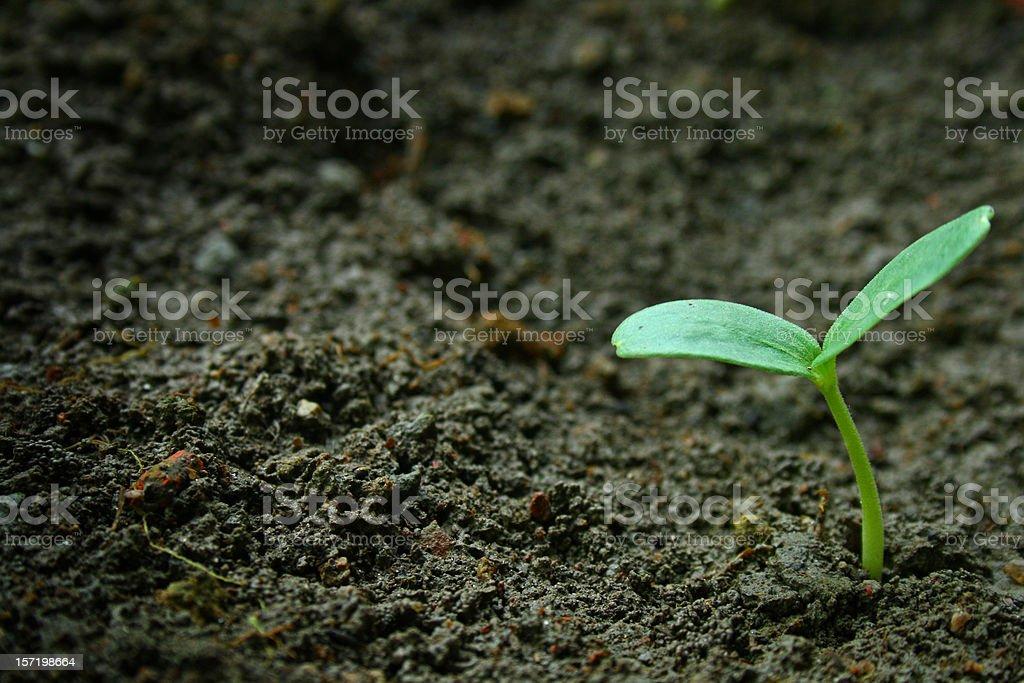 new born plant royalty-free stock photo
