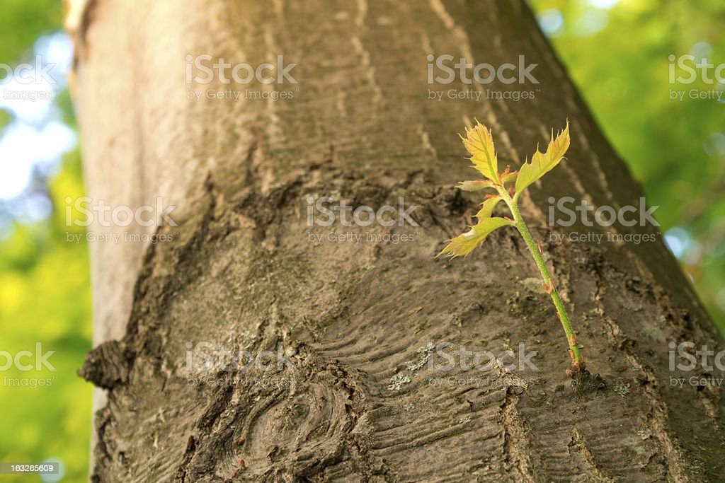New Branch Growing on Tree. royalty-free stock photo