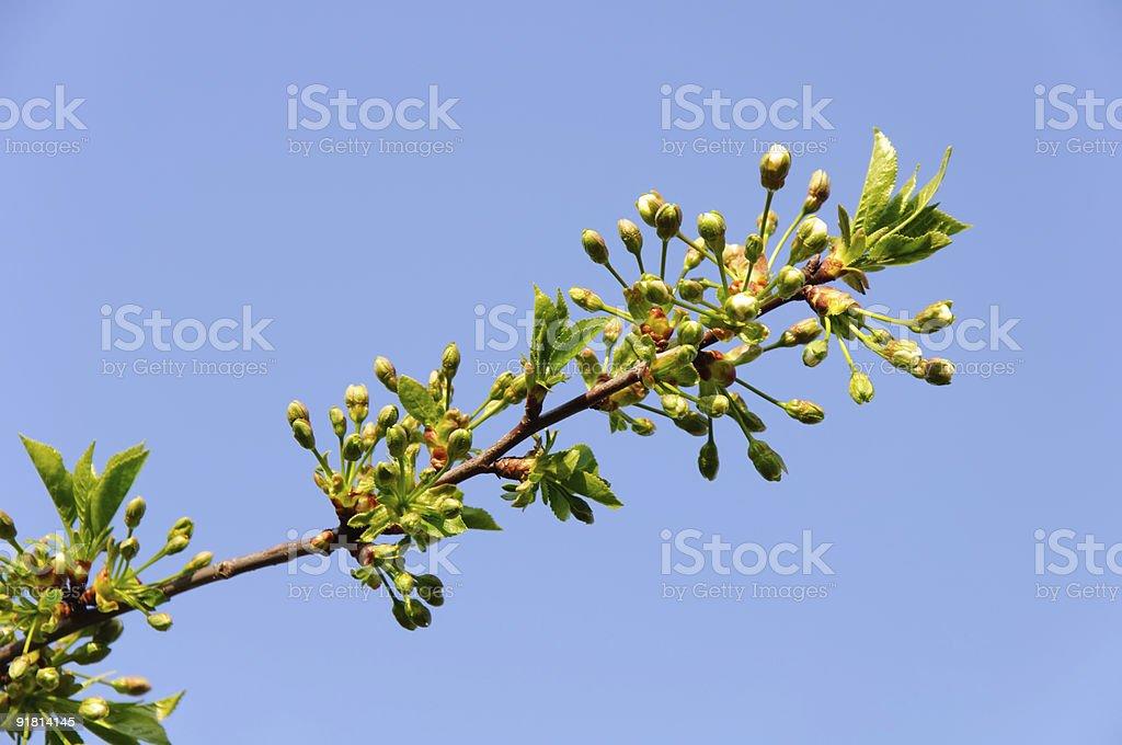 new bud. Spring symbol. royalty-free stock photo