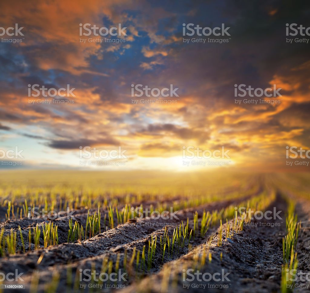 New cereal royalty-free stock photo