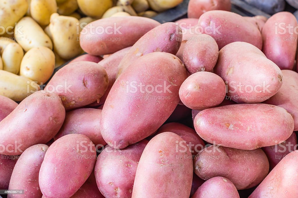 New crop red potatoes at market stock photo
