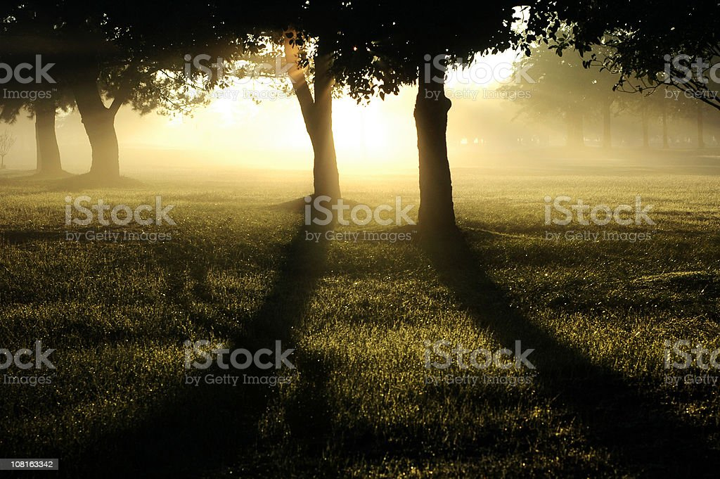 New day royalty-free stock photo