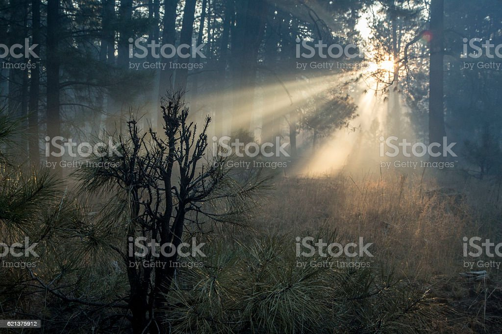 New Day stock photo
