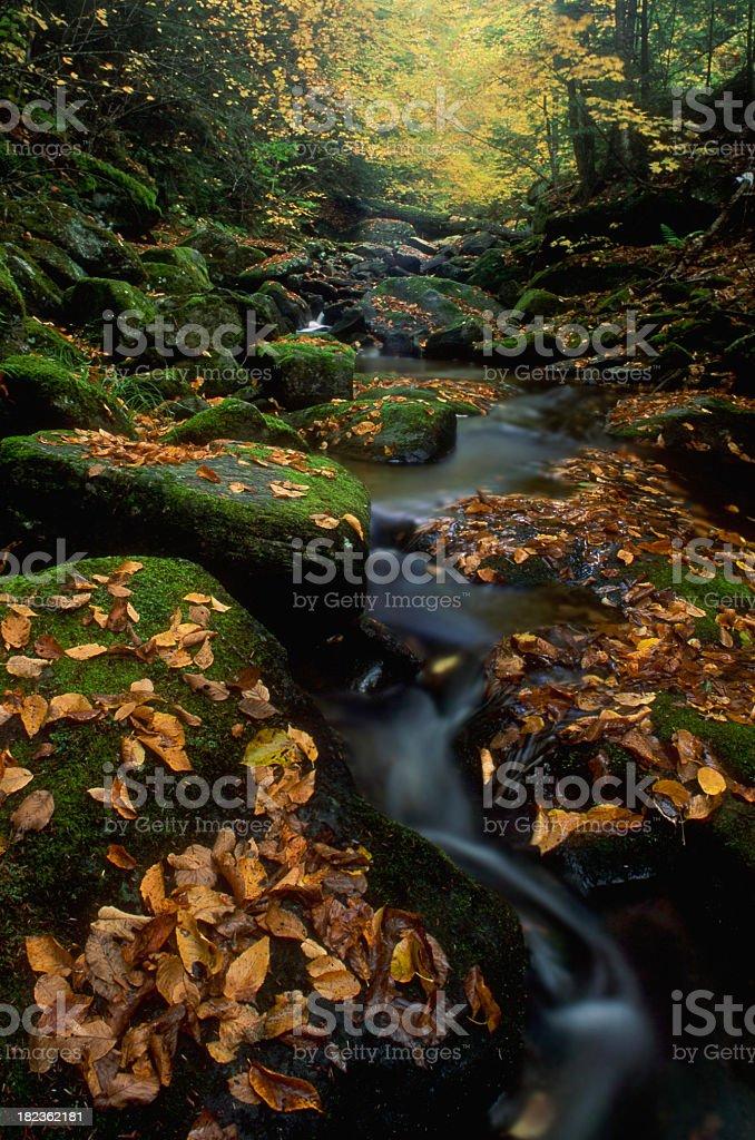 New England Autumn Stream royalty-free stock photo