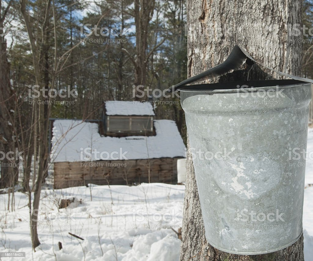 New England Maple Sugar Shack in the Forest stock photo